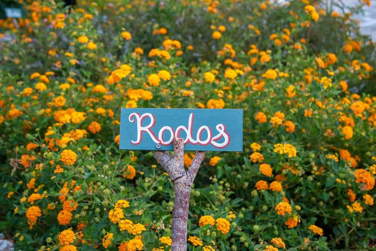 Rhodos - favoriter du inte får missa på ön 15